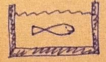 flexi stabi fisch